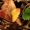 "Prairieview Nature: Taylor - ""The Leaf"""