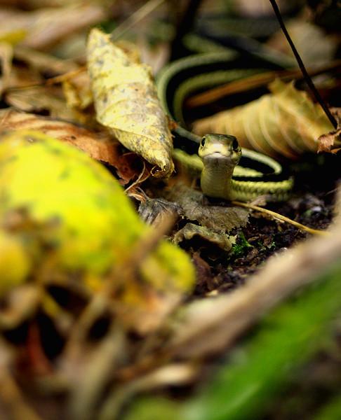 """Prairieview Nature: Mackenzie, 16 - """"Garter Snake"""""""