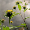 """Prairieview Nature: Hannah, 16 - """"Looking Up To Weathered Hope"""""""