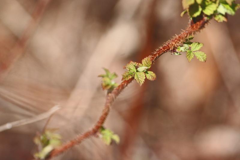 "Prairieview Nature: Zana, 17 - ""Confliction"""
