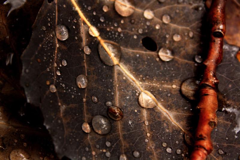 "Prairieview Nature: Destiny, 16 - ""Raindrops"""