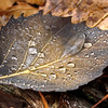 "Prairieview Nature: Tierra, 16 - ""Leaf"""