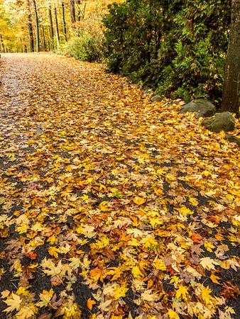 Cœur d'automne