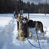 DogSledding :