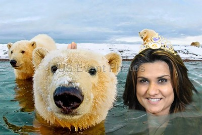 swimming with bears