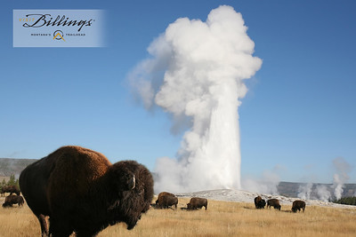 Billings Old Faithful with Baison