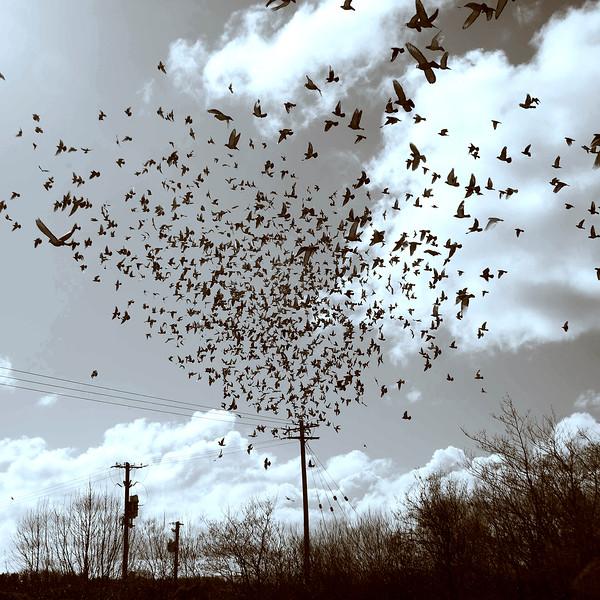 The Birds by John Carroll