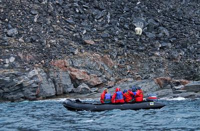 View of a polar bear and a Zodiac vessel, Devon Island, Canada
