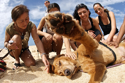 Lucky making friends on a North Shore beach, Oahu, Hawaii