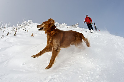 Jake Elkins of the Jackson Hole Ski Patrol, skiing with his dog