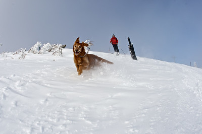 Jake Elkins of the Jackson Hole Ski Patrol skiing with his dog