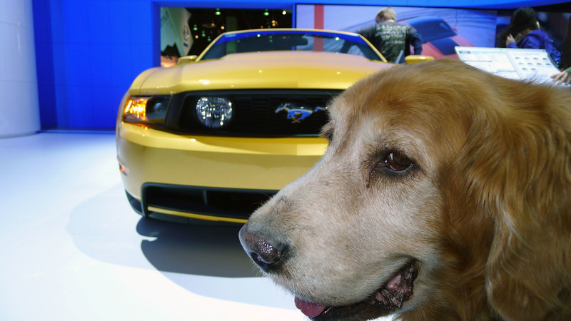Lucky at The Auto Show Detroit