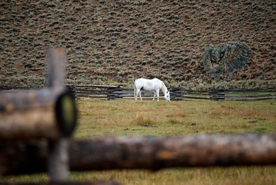 White Horse in Corral, Warm Springs Road, Sun Valley