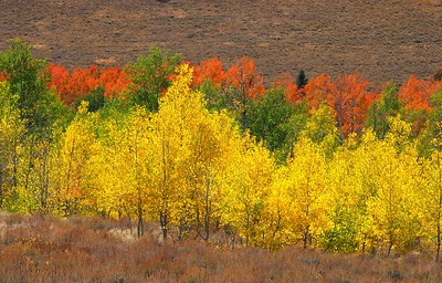 Sun Valley, Idaho Landscapes, Sawtooth Valley Fall Colors