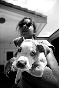 An SPCALA employee holding a puppy