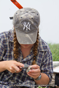Measuring a Tern Chick