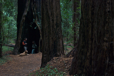 Hendy Woods, Mendocino, California