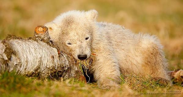 © Søren Koch, Hilmer & Koch Nature Photography