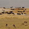 Herds of antelopes, zebras, and wildebeests in Serengeti National Park, Tanzania