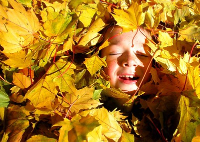 This is the one photo not shot near my home. This is Scott  Glaittli, my nephew from Logan, Utah. The big pile of leaves was just more than he could resist.