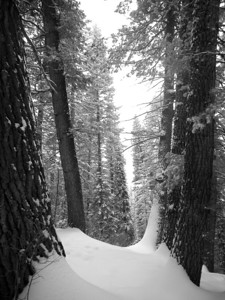 I captured this image on a snowshoe trip. I was headed back to my vehicle and the drifts of snow against the pine trees caught my eye. It is best to view this one a little larger to see the detailed texture of the snow. Just click on it.