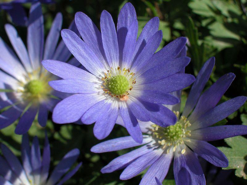 Flowers in my back yard.
