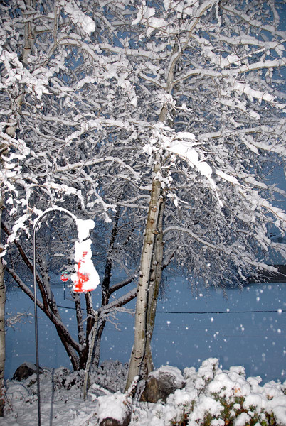 12/7/07 – I love it when the snow sticks to the branches of the trees like this. It makes me feel like I live up in the mountains. There is a charm that only lasts a few hours before it warms up and falls to the ground.