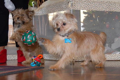 12/25/07 – photo 3 of 6. Even the dogs got a few Christmas toys and enjoyed playing with them Christmas morning.