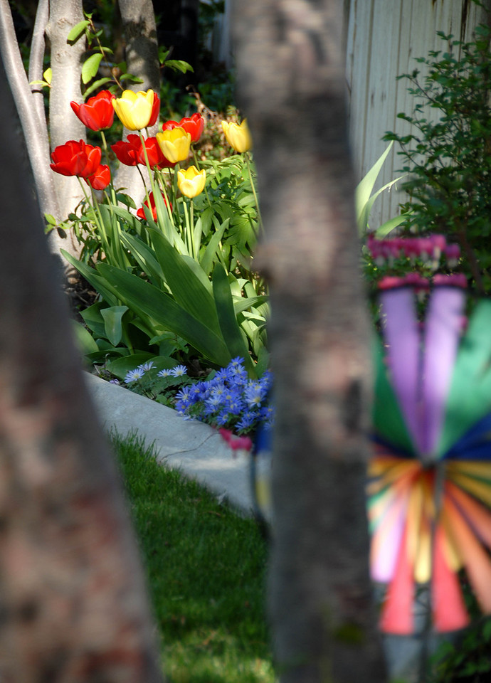 4/28/07 – Just a different view in our back yard of the spring colors.