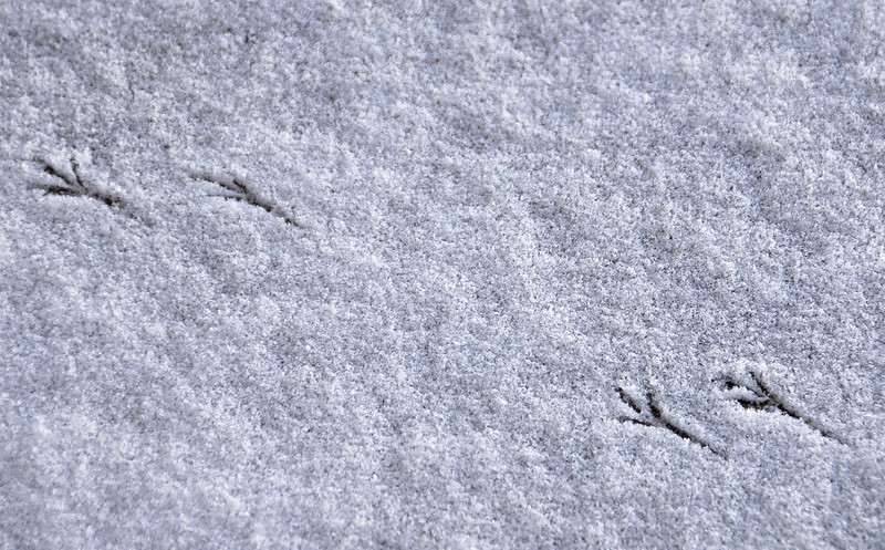 12/22/07 – We had a fresh dusting of snow on the front porch. When I opened the door I could see that a small bird had been hopping around leaving tracks in the otherwise flawless snow.