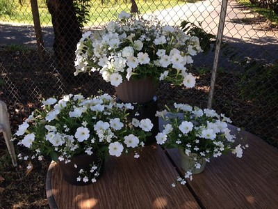 "12"" hanging basket with the 10"" and 6"" planters all in white."