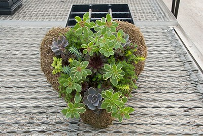 Our Succulent Heart Wreaths are awful pretty...