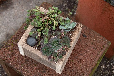 Weathered Wooden Boxes of Succulents