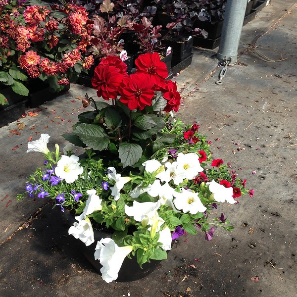 "12"" Red White Blue Planter"