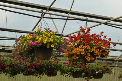 Hanging Baskets of beauty