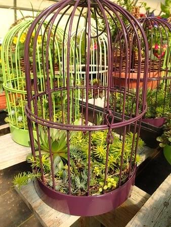 New Color! Medium Bird Cage o' Succulents