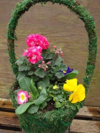Medium Moss Basket