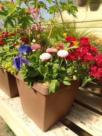 Square Plant o' Spring Color