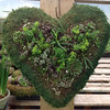 "14"" Moss Hearts with Succulents"