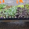 Organic Veggies