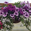"12"" Wicker Hanging Baskets"
