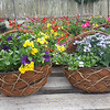 Wicker Wall Baskets