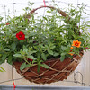 "14"" Wicker Wall Basket"