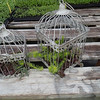 Birdcages