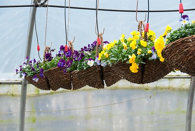 Wicker Wall Baskets are perfect for those who don't have room for a hanging basket.