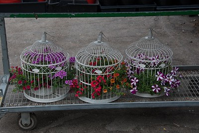 Eye Catching Vintage Bird Cages