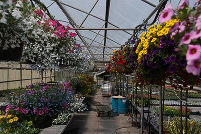 Color Color Colorful hanging baskets.