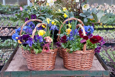 Wicker Planter O' Color