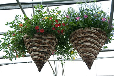 Wicker Cone Hanging Baskets - I do so love these.