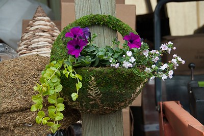 Moss Wall Basket of Color. Great for small spaces!